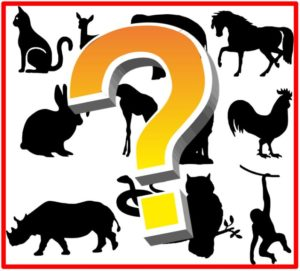 Mystery Animal Silhouettes